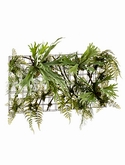 Fern|staghorn On iron stand