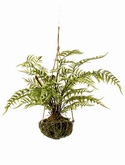Forest fern On iron stand round hanging